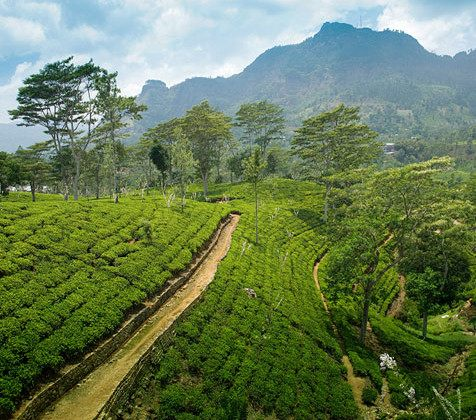 Kawa Świeżo Palona Peru Organic Coffe Arabica Plantacja